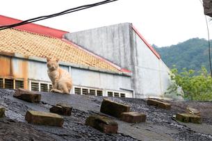 猴硐猫村 Houtong Cat Village 屋根の上のネコの写真素材 [FYI04490956]
