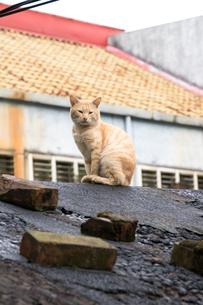 猴硐猫村 Houtong Cat Village 屋根の上のネコの写真素材 [FYI04490957]