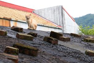 猴硐猫村 Houtong Cat Village 屋根の上のネコの写真素材 [FYI04490958]