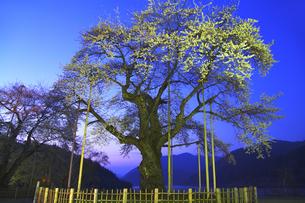 荘川桜ライトアップの写真素材 [FYI04491060]