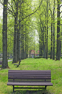 新緑の銀杏並木の写真素材 [FYI04491130]