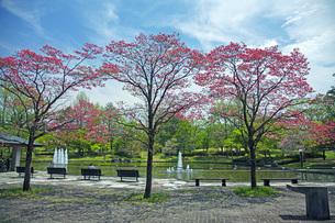春の県総合運動公園の写真素材 [FYI04491138]