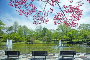 春の県総合運動公園の写真素材 [FYI04491139]