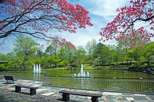 春の県総合運動公園の写真素材 [FYI04491140]
