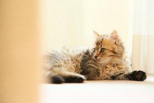 猫の写真素材 [FYI04491562]