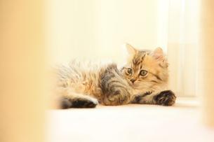 猫の写真素材 [FYI04491563]