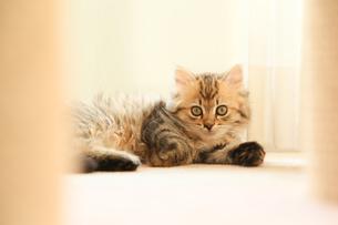 猫の写真素材 [FYI04491564]