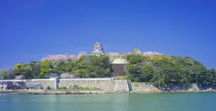 佐賀県 桜 唐津城 (舞鶴公園) の写真素材 [FYI04491663]