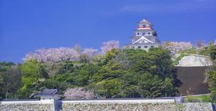佐賀県 桜 唐津城 (舞鶴公園) の写真素材 [FYI04491666]