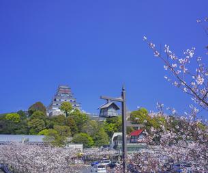 佐賀県 桜 唐津城 (舞鶴公園) の写真素材 [FYI04491692]