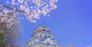 佐賀県 桜 唐津城 (舞鶴公園) の写真素材 [FYI04491694]