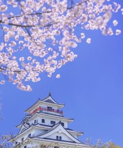 佐賀県 桜 唐津城 (舞鶴公園) の写真素材 [FYI04491696]
