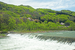 新緑の寒河江川の写真素材 [FYI04491746]