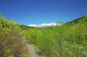 新緑の寒河江川の写真素材 [FYI04491750]