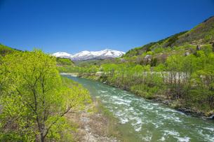 新緑の寒河江川の写真素材 [FYI04491751]