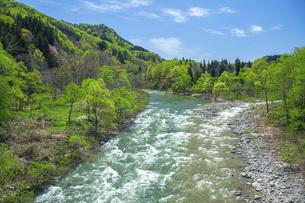 新緑の寒河江川の写真素材 [FYI04491753]