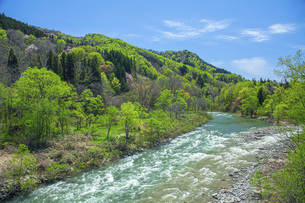 新緑の寒河江川の写真素材 [FYI04491754]