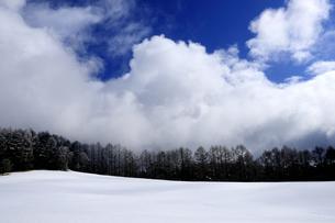 雪原とカラマツ防風林の写真素材 [FYI04491779]