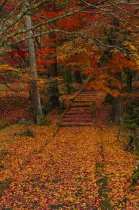 京都府 園部の紅葉の写真素材 [FYI04492016]
