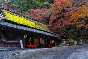 京都  鮎茶屋 平野屋の写真素材 [FYI04492023]