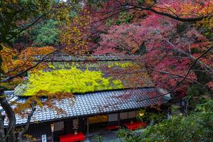京都  鮎茶屋 平野屋の写真素材 [FYI04492029]