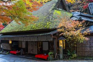 京都 鮎の宿 つたやの写真素材 [FYI04492033]