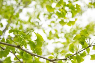 新緑の写真素材 [FYI04492179]
