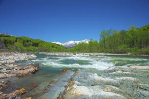 新緑の寒河江川の写真素材 [FYI04492237]