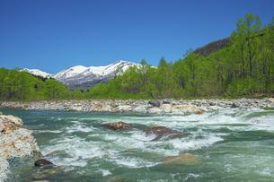 新緑の寒河江川の写真素材 [FYI04492238]