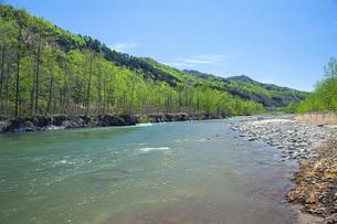 新緑の寒河江川の写真素材 [FYI04492240]