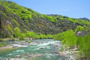 新緑の寒河江川の写真素材 [FYI04492241]