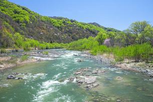 新緑の寒河江川の写真素材 [FYI04492242]