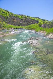 新緑の寒河江川の写真素材 [FYI04492243]