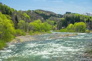 新緑の寒河江川の写真素材 [FYI04492258]