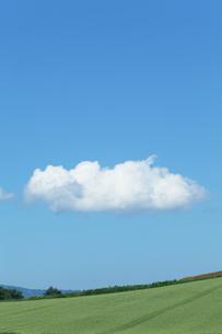 北海道美瑛の麦畑の丘と白い雲の写真素材 [FYI04492280]