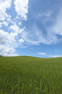 北海道美瑛の丘の麦の景色の写真素材 [FYI04492281]