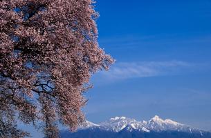 わに塚のサクラと八ヶ岳連峰の写真素材 [FYI04492445]