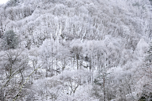 蓼科高原雪景色の写真素材 [FYI04492663]