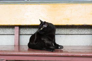 猫村のベンチに座る黒猫の写真素材 [FYI04492763]