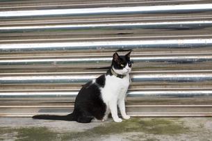ホウトン猫村、シャッター前のネコの写真素材 [FYI04492766]