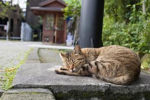 ホウトン猫村、眠る猫の写真素材 [FYI04492767]