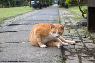 猫村の広場に座る茶白のネコの写真素材 [FYI04492772]