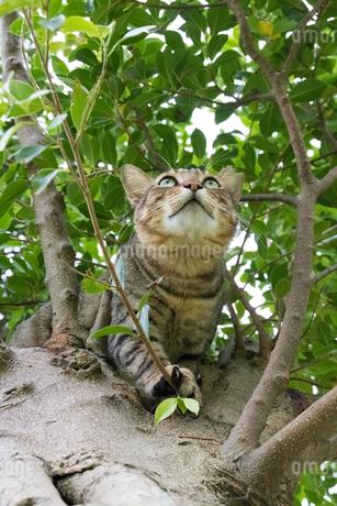 ホウトンの猫村、空を見上げる猫の写真素材 [FYI04492800]