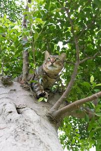 ホウトンの猫村、空を見上げる猫の写真素材 [FYI04492801]