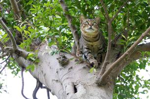 ホウトンの猫村、空を見上げる猫の写真素材 [FYI04492804]