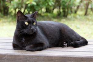 ホウトン猫村、ベンチでくつろぐ黒猫の写真素材 [FYI04492809]