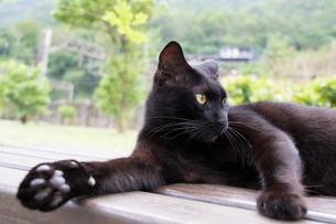 ホウトン猫村、黒猫のグレーの肉球の写真素材 [FYI04492810]