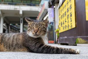 ホウトンの駅前で寝そべる猫の写真素材 [FYI04492813]