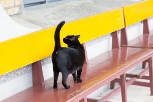 ホウトン猫村、カラフルなベンチを歩く黒猫の写真素材 [FYI04492815]