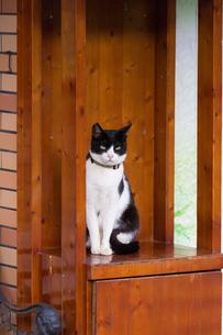 ホウトンの猫村、出迎える黒白猫の写真素材 [FYI04492820]